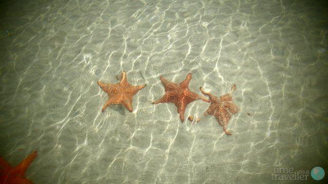 Bocas del Toro Starfish