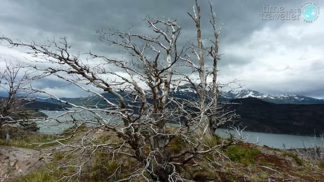 torres-del-paine-tree